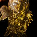 穴吹あきひろさんの香川県坂出市でのタケノコメバルの釣果写真