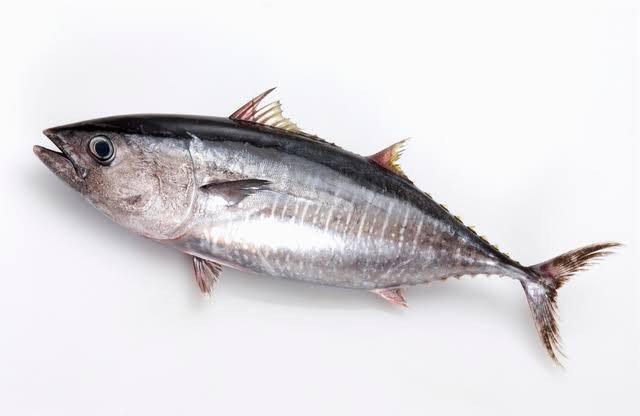 きよさんの投稿画像,写っている魚はクロマグロ