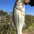 しらふさんの茨城県潮来市での釣果写真