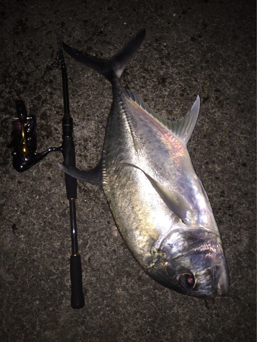 ユウキさんの投稿画像,写っている魚はロウニンアジ