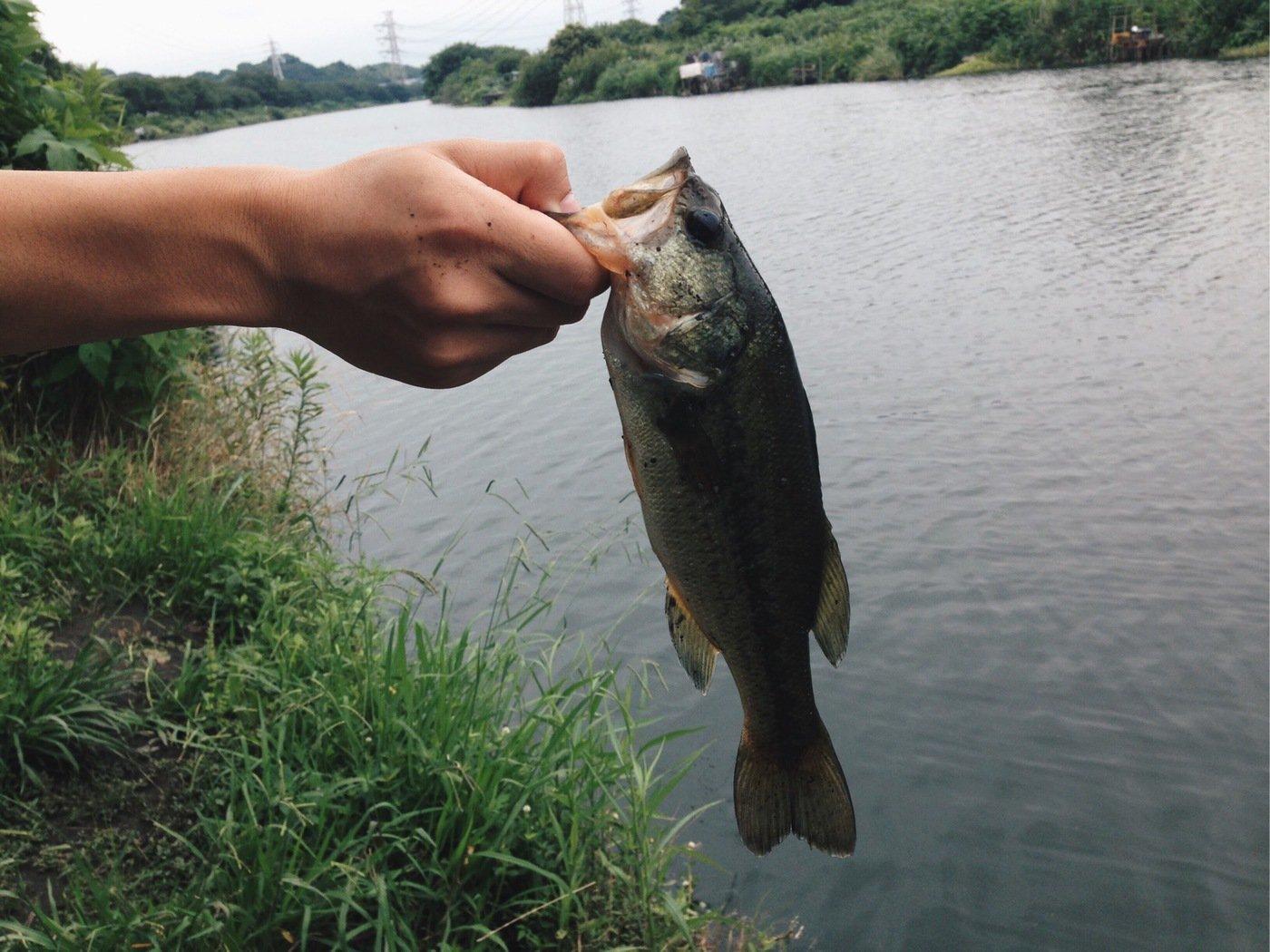 山中貴義さんの投稿画像,写っている魚はブラックバス