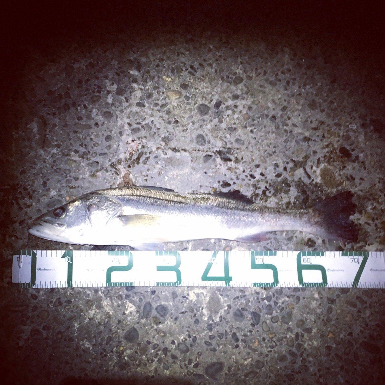 なおなおさんの投稿画像,写っている魚はスズキ