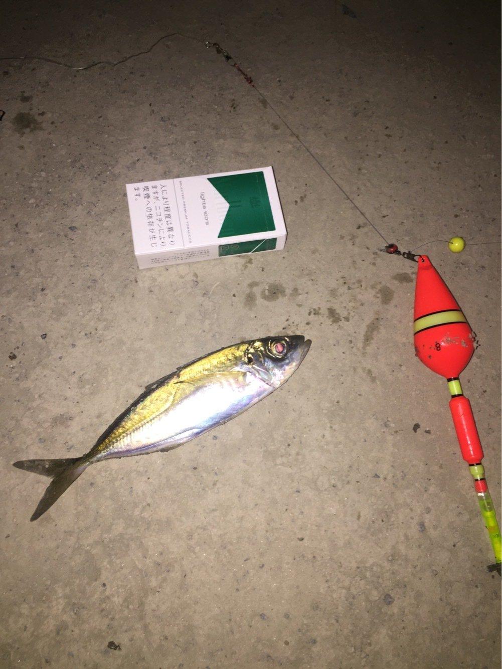 ★瀬極会☆底モン野郎★さんの投稿画像,写っている魚はアジ