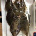 りょーさんの岩手県奥州市での釣果写真