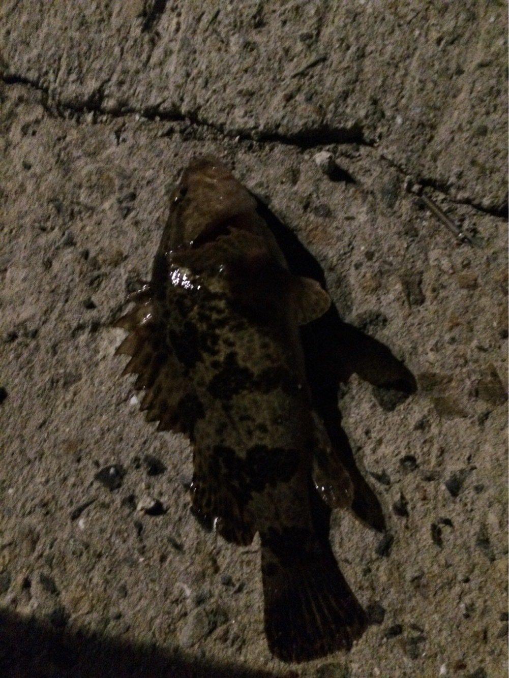 buryunntoさんの投稿画像,写っている魚はタケノコメバル
