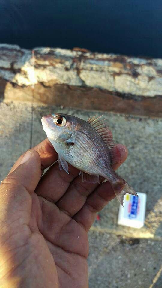 フルフルさんの投稿画像,写っている魚は