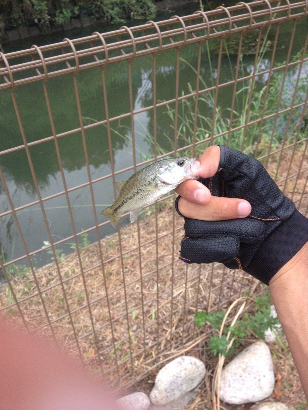 angler 俺達。さんの投稿画像,写っている魚は