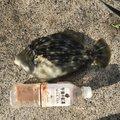 syuuyaさんのカワハギの釣果写真