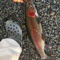 ゆさんの静岡県藤枝市での釣果写真
