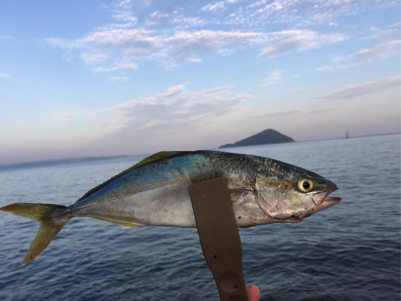てつさんの投稿画像,写っている魚はブリ