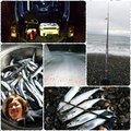 ⚝:*田̎舎̎のオやジ*:⚝ さんの長野県北安曇郡での釣果写真