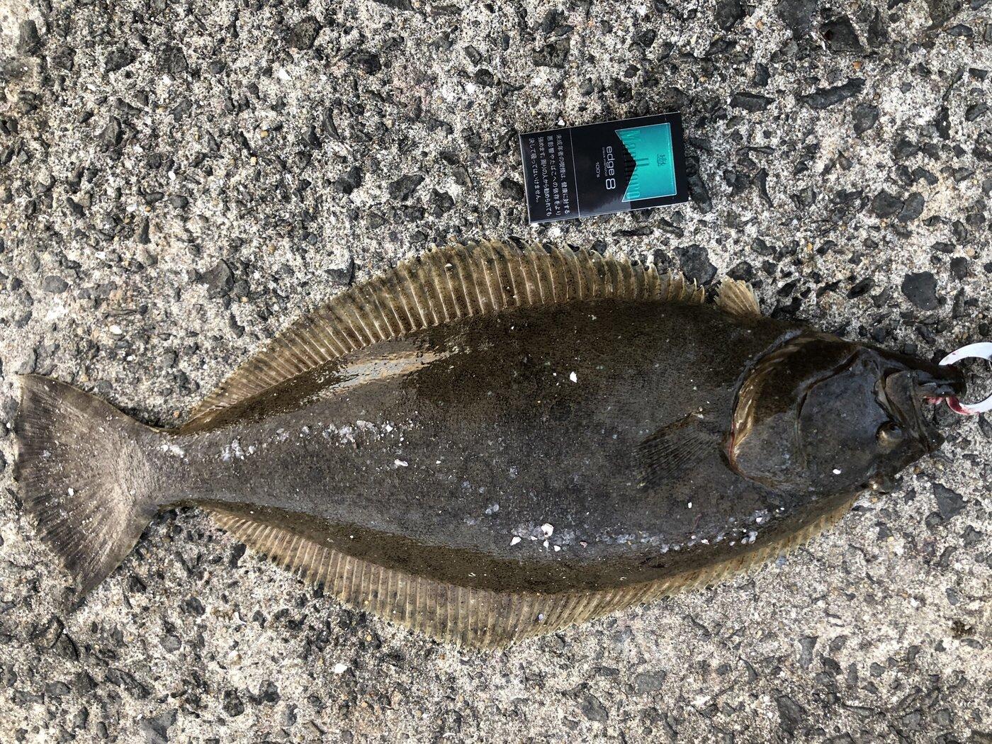 小瀬良克祐さんの投稿画像,写っている魚はヒラメ