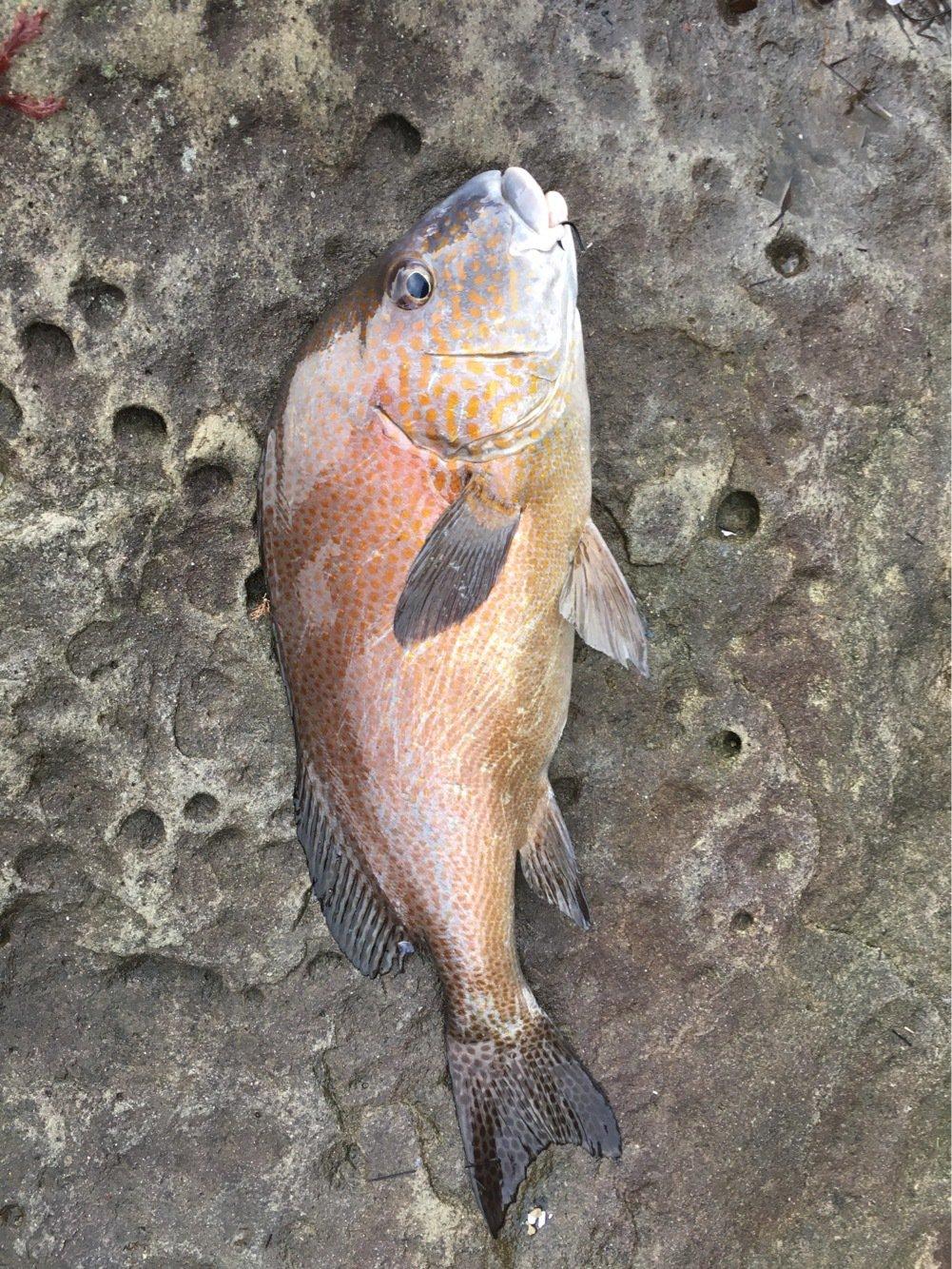 ぴくるすさんの投稿画像,写っている魚は