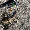 #べる坊#さんの熊本県天草郡での釣果写真