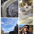 KRO さんの静岡県裾野市での釣果写真