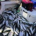 イーグルさんの石川県小松市での釣果写真