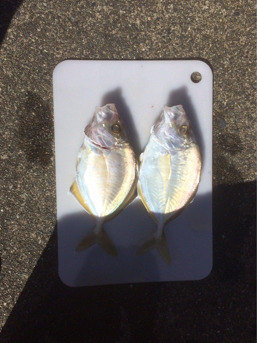 ヒロッシーさんの投稿画像,写っている魚はカイワリ