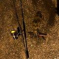 ☆肥後釣り倶楽部☆さんの熊本県水俣市での釣果写真