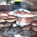 佐藤寛徳さんの静岡県熱海市での釣果写真