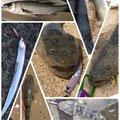 じゅんくんさんの三重県四日市市でのコチの釣果写真