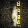 たっくんさんの滋賀県大津市での釣果写真