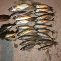 あんどうさんの大分県臼杵市での釣果写真