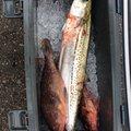 Shori Kitsさんの石川県金沢市での釣果写真