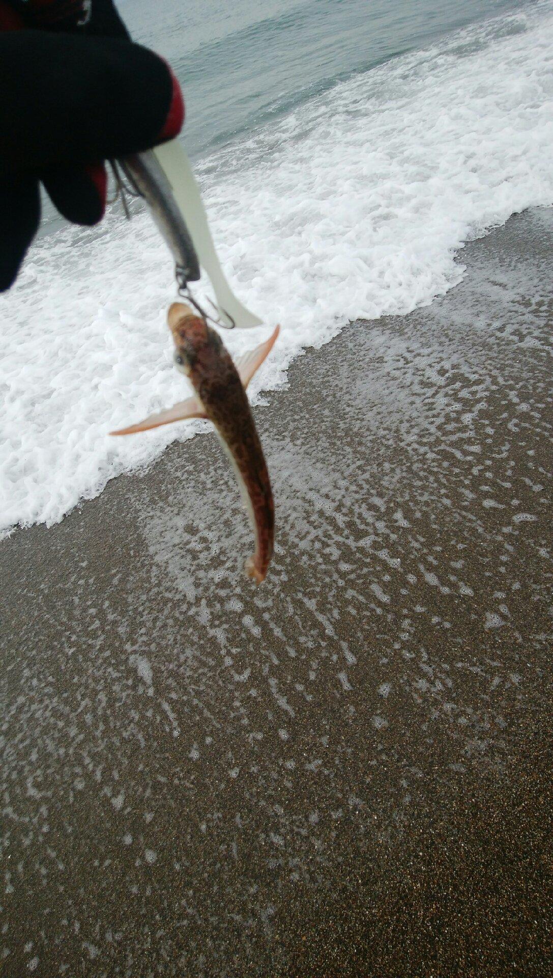 杉田寿限無さんの投稿画像,写っている魚はハタハタ