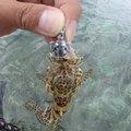 88diverさんの沖縄県南城市での釣果写真