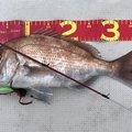 池真丸さんの広島県呉市での釣果写真