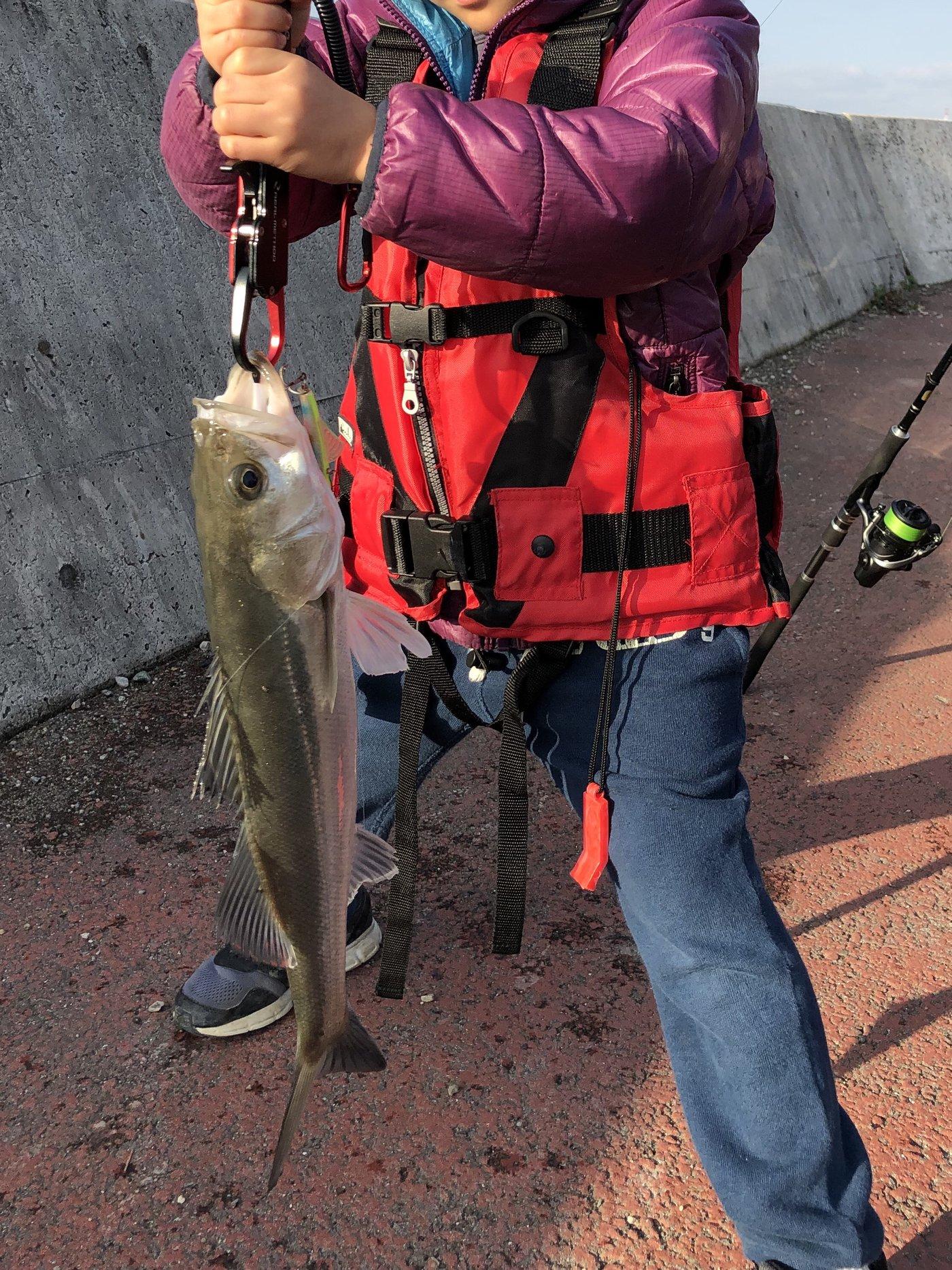 サラリーマン釣り太郎@幻影魚団さんの投稿画像,写っている魚はスズキ