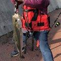 サラリーマン釣り太郎@幻影魚団さんの福岡県行橋市でのスズキの釣果写真