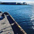 chiekoさんの千葉県浦安市での釣果写真