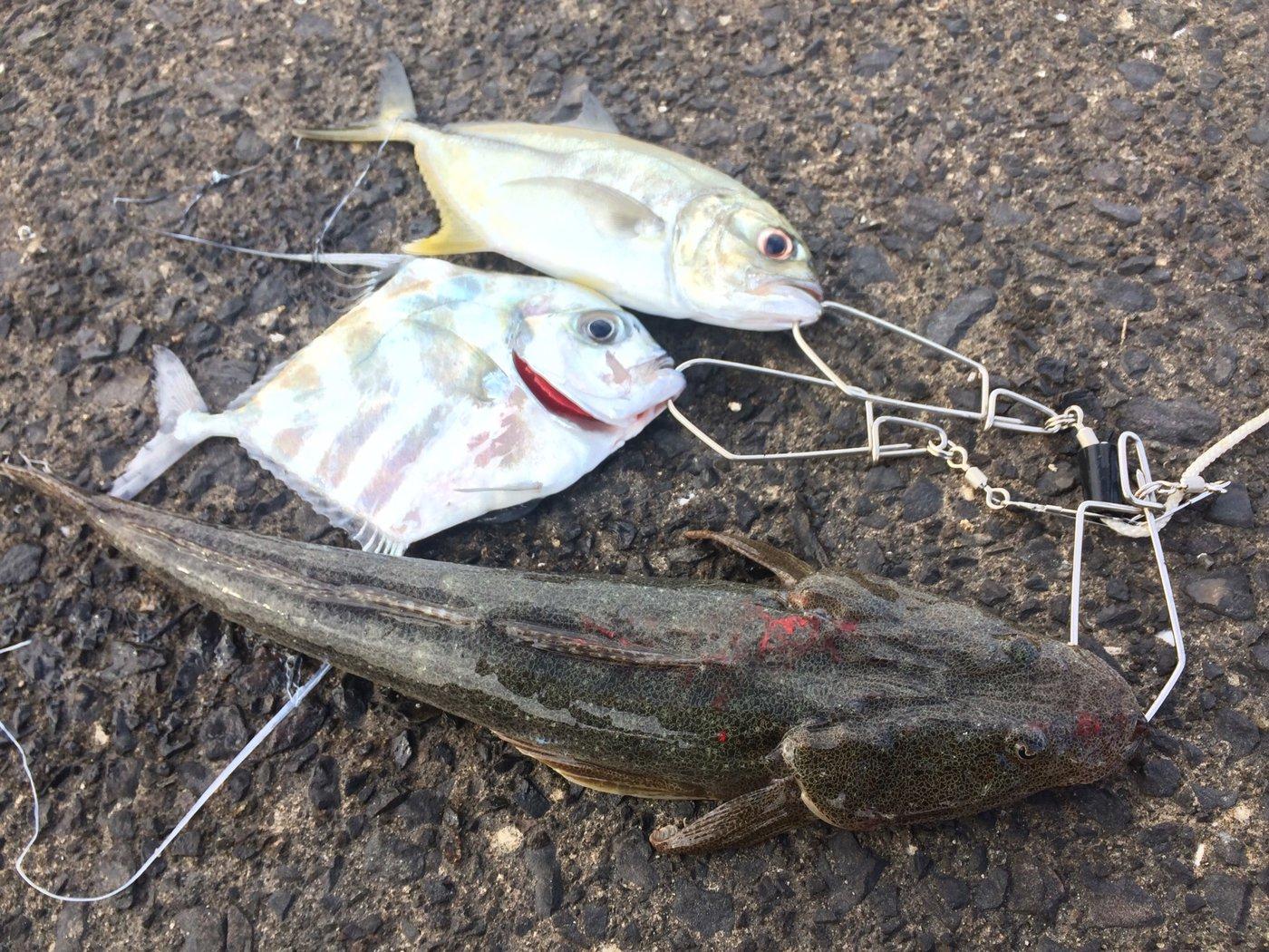 ドンコビッさんの投稿画像,写っている魚はギンガメアジ,イトヒキアジ,コチ