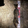 のんちっちさんの北海道でのアイナメの釣果写真