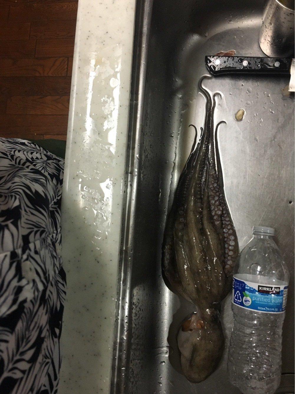 かめさんの投稿画像,写っている魚はマダコ