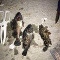 DAIさんの香川県東かがわ市での釣果写真