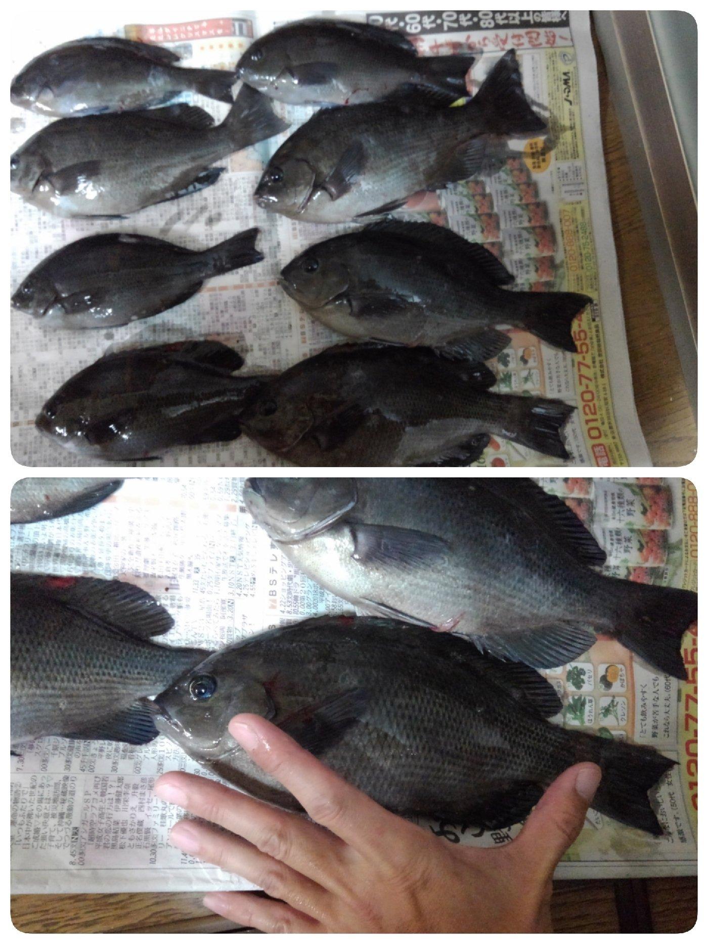 靖さんの投稿画像,写っている魚はメジナ