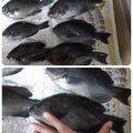靖さんの長野県北安曇郡での釣果写真