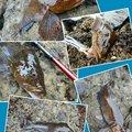 hide(SWS)さんの北海道でのアイナメの釣果写真