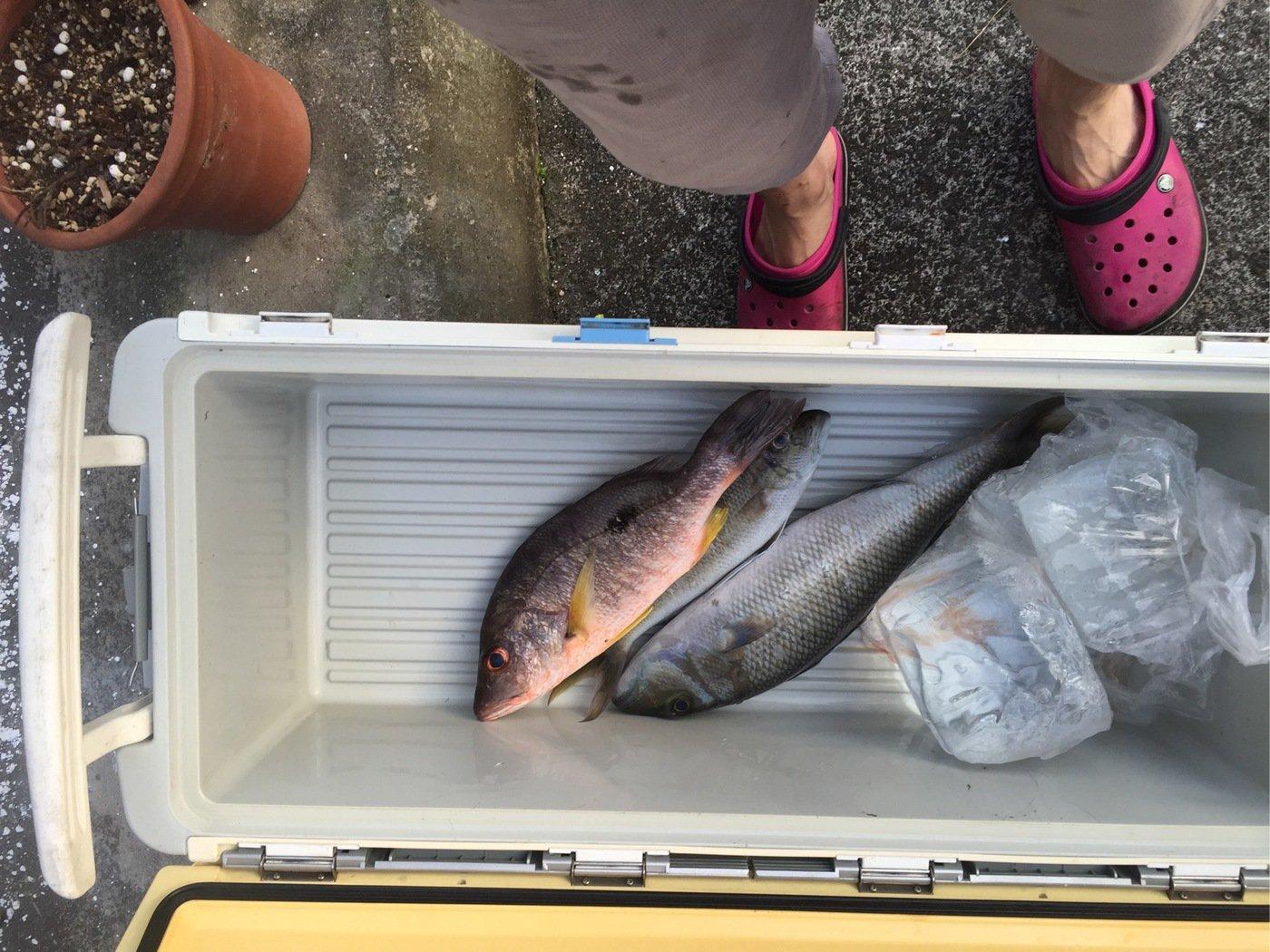 なおさんの投稿画像,写っている魚はアオチビキ