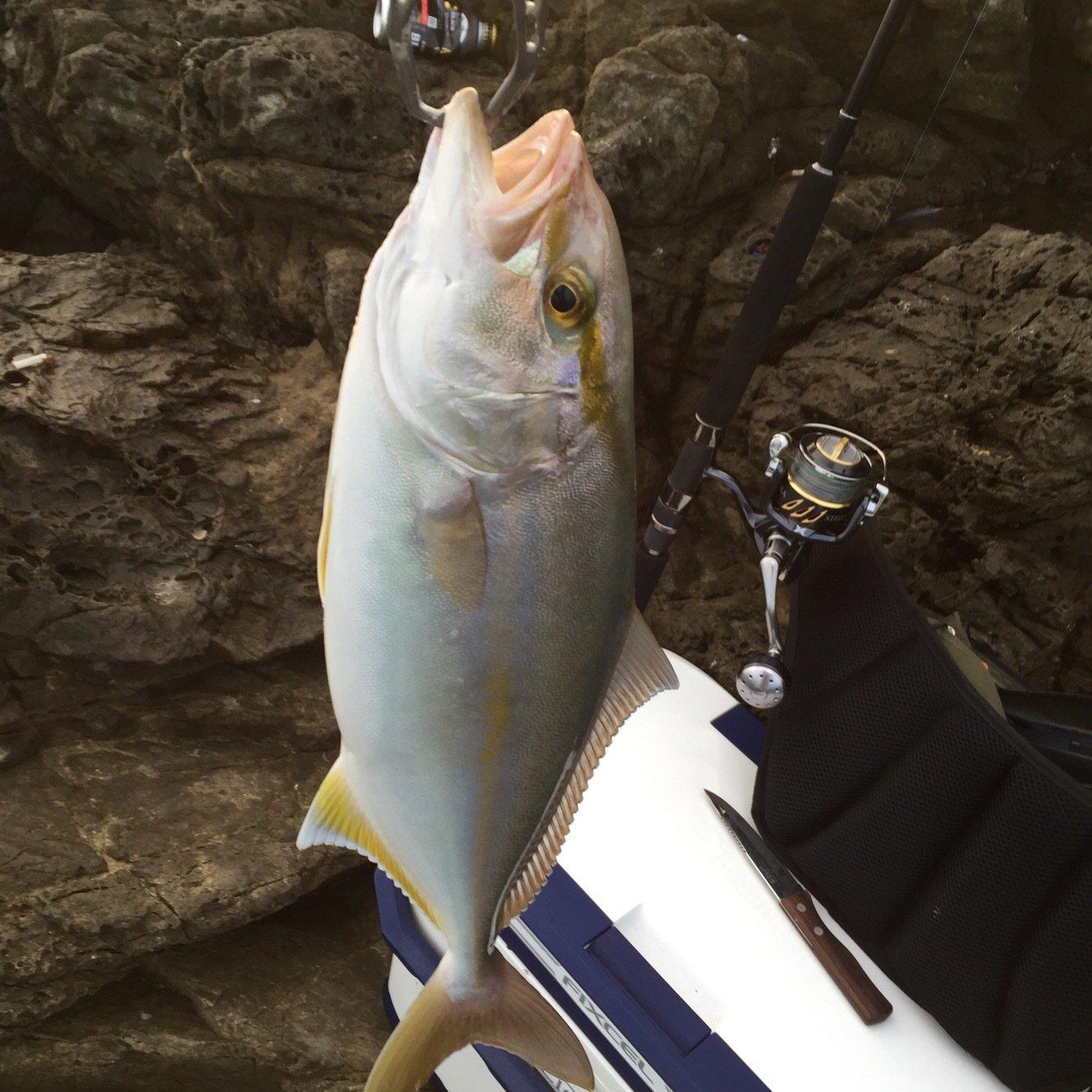 てつぽんさんの投稿画像,写っている魚はカンパチ