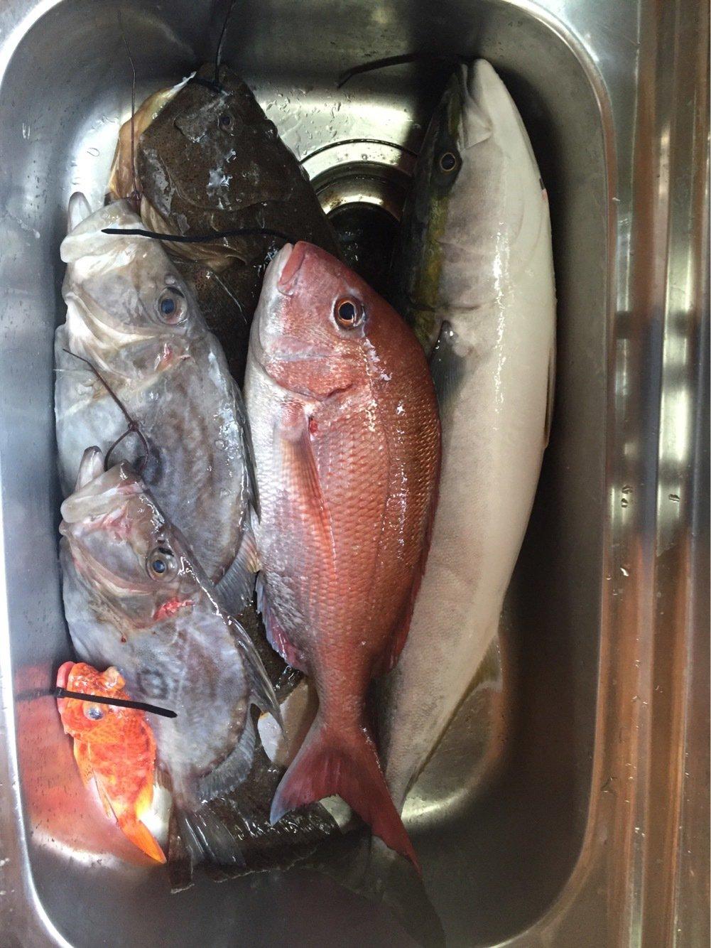 なおさんの投稿画像,写っている魚はヒラメ