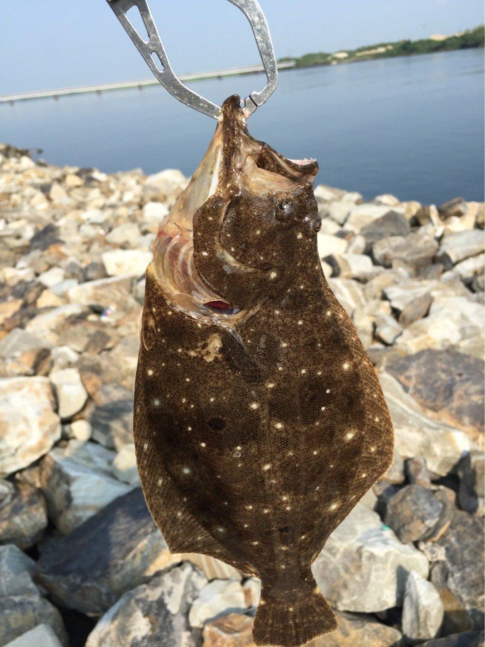 マルスさんの投稿画像,写っている魚は