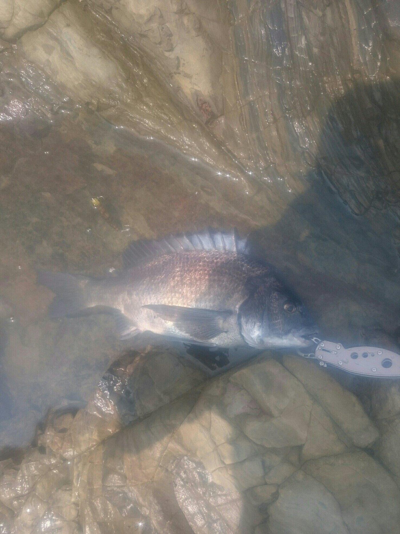 フルタカさんの投稿画像,写っている魚は