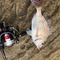 サイカワ@アコウ社長さんの長崎県松浦市での釣果写真