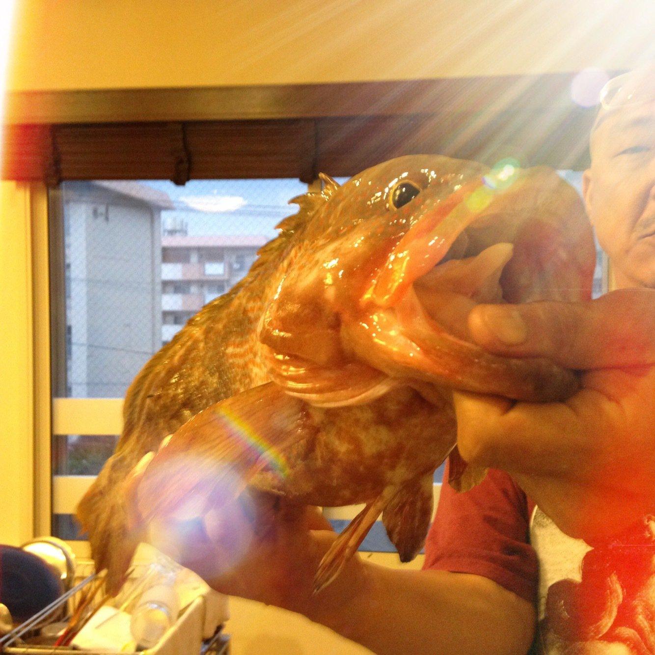 よんすさんの投稿画像,写っている魚はキジハタ