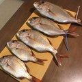 アブ太郎さんの香川県小豆郡での釣果写真