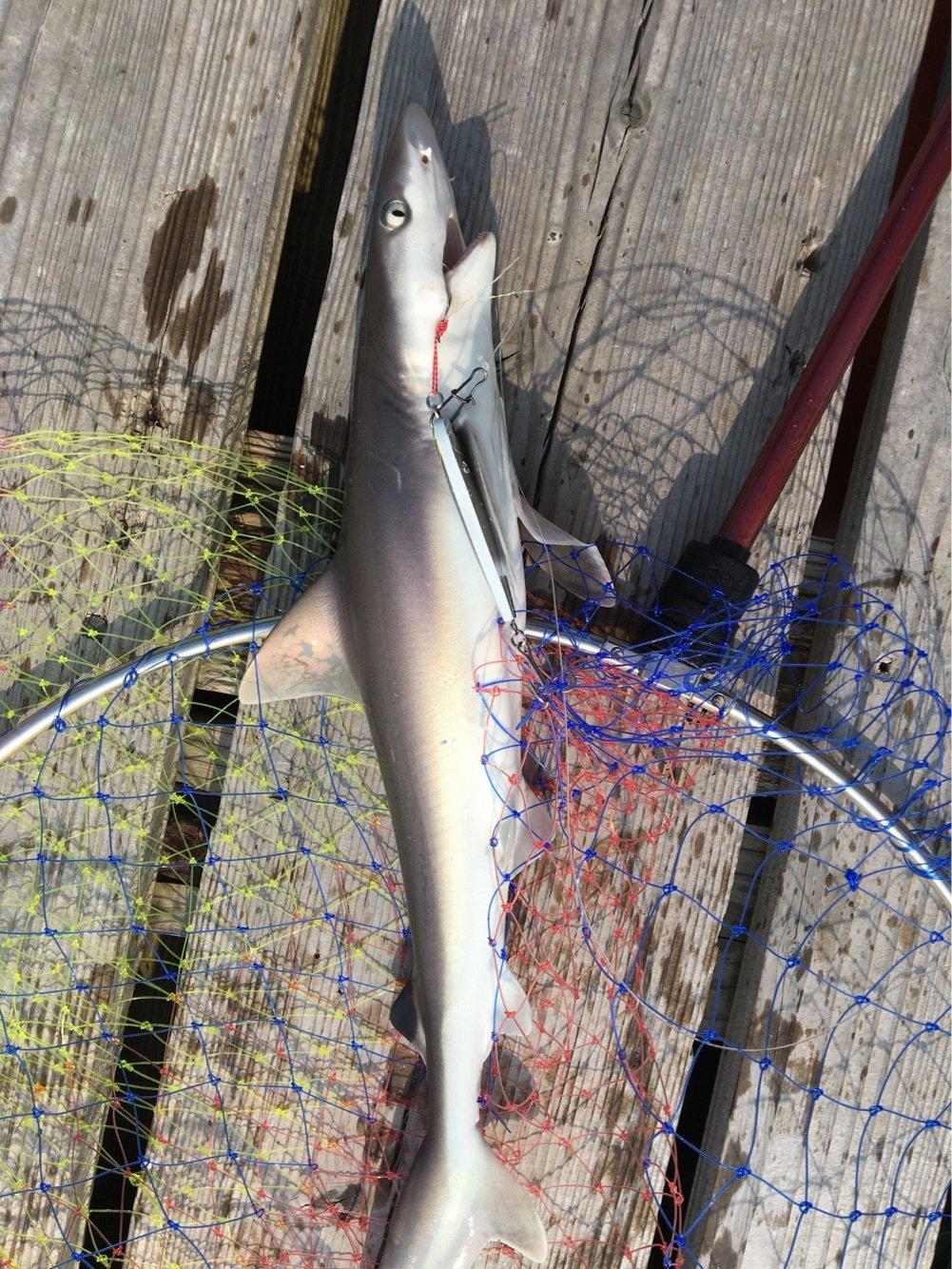 健斗さんの投稿画像,写っている魚はシロザメ