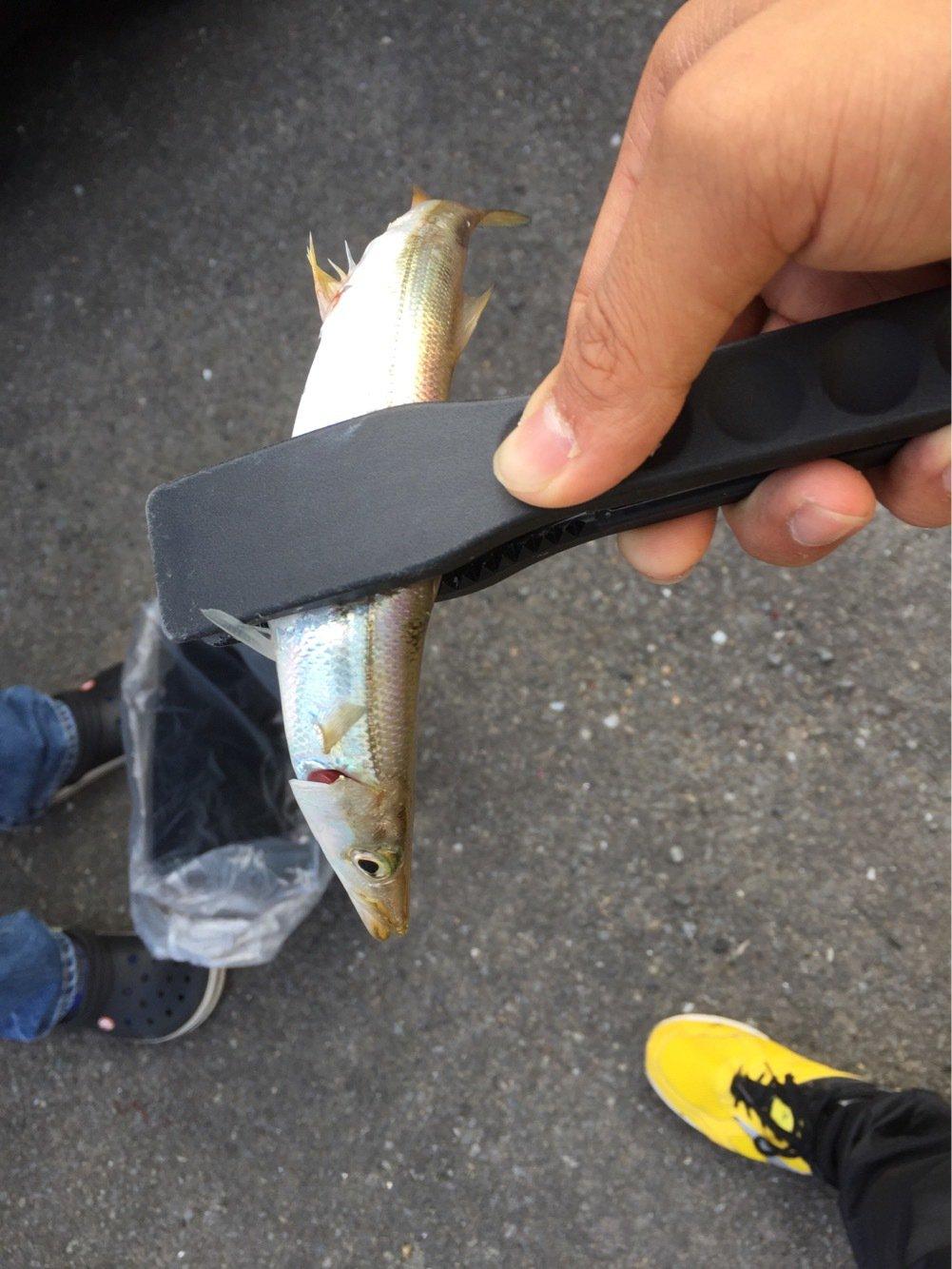 ルアー人in大分さんの投稿画像,写っている魚はカマス